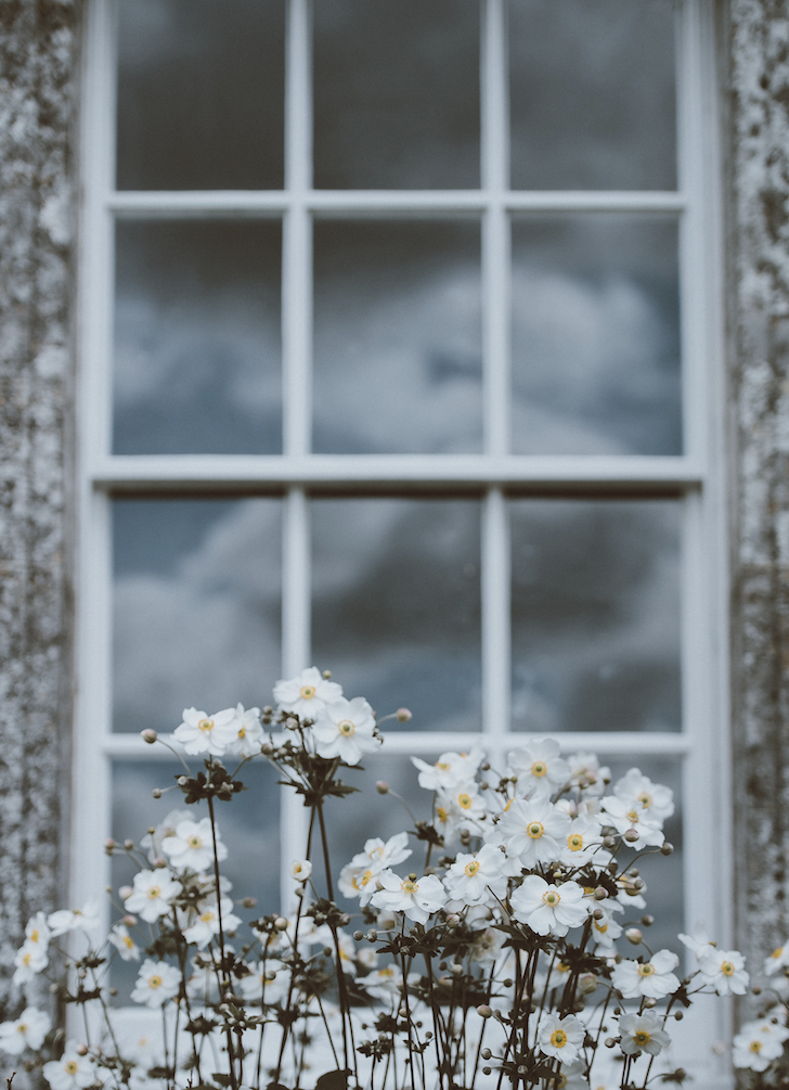 A photo showing white sash windows with daisies